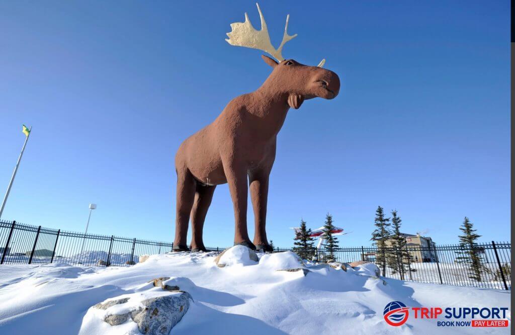 Saskatchewan's Favourite Moose