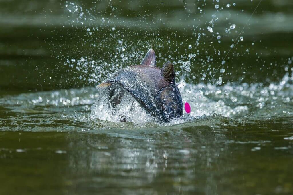 Bow River Fishing Spots