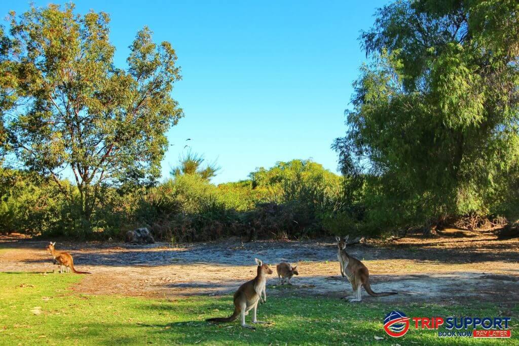 Perth: Yanchep National Park
