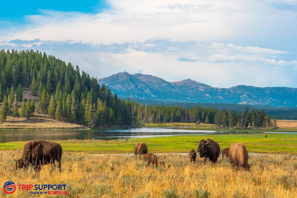 Spring in Yellowstone National Park